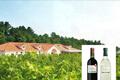 安曇野周辺の自社農園や契約農園で、輝く太陽と豊かな大地の恵みを受けて栽培されたぶどうからワインを造り続けています。ぶどうのみならず自社農園では、低農薬の野菜、果物の栽培に取り組み、自社のレストラン、バーベキューコーナーで観光客に提供しています。