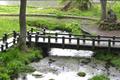 「日本の名水百選」にも選ばれる清流の里です。湿原に清水が湧き、流れをつくり、やがて川になる様子が見渡せる神秘の世界です。